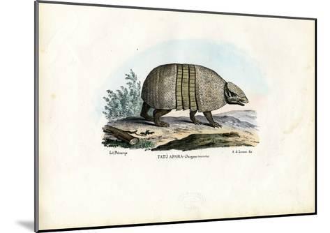 Southern Three-Banded Armadillo, 1863-79-Raimundo Petraroja-Mounted Giclee Print