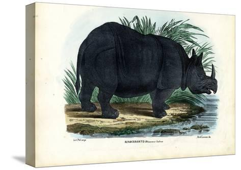 Greater One-Horned Rhinoceros, 1863-79-Raimundo Petraroja-Stretched Canvas Print
