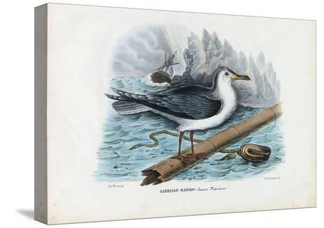 Great Black-Backed Gull, 1863-79-Raimundo Petraroja-Stretched Canvas Print
