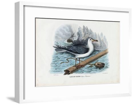 Great Black-Backed Gull, 1863-79-Raimundo Petraroja-Framed Art Print