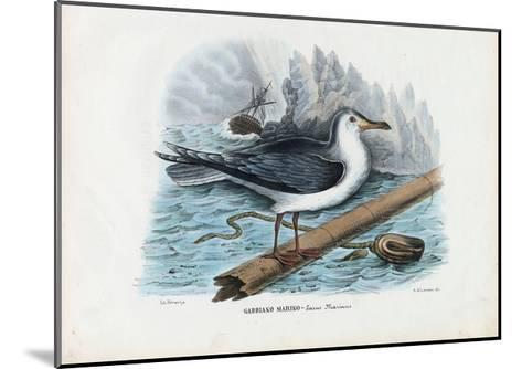 Great Black-Backed Gull, 1863-79-Raimundo Petraroja-Mounted Giclee Print