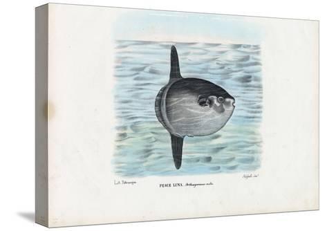 Ocean Sunfish, 1863-79-Raimundo Petraroja-Stretched Canvas Print
