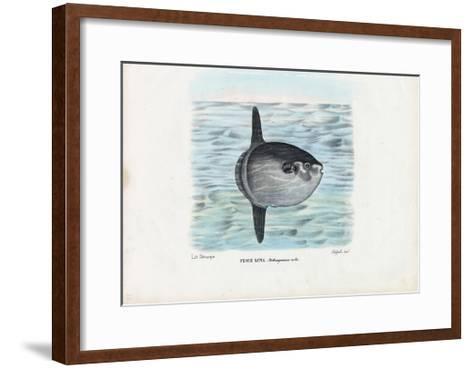 Ocean Sunfish, 1863-79-Raimundo Petraroja-Framed Art Print