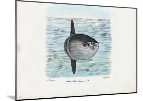 Ocean Sunfish, 1863-79-Raimundo Petraroja-Mounted Giclee Print