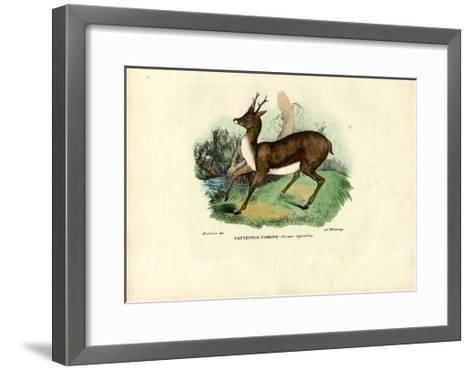 Roe Deer, 1863-79-Raimundo Petraroja-Framed Art Print