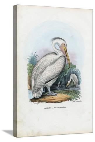 Great White Pelican, 1863-79-Raimundo Petraroja-Stretched Canvas Print