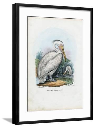 Great White Pelican, 1863-79-Raimundo Petraroja-Framed Art Print