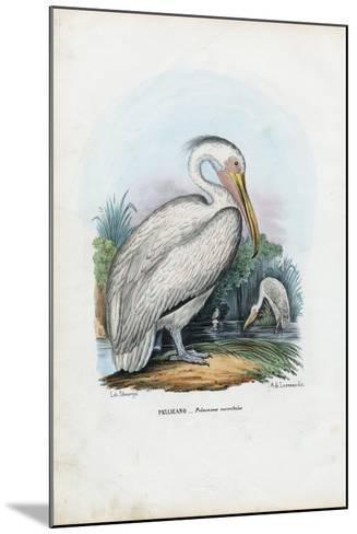 Great White Pelican, 1863-79-Raimundo Petraroja-Mounted Giclee Print