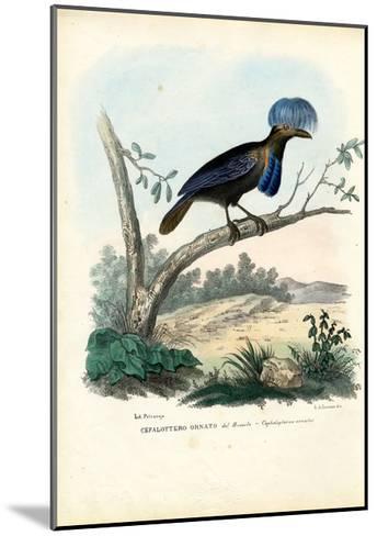 Amazonian Umbrellabird, 1863-79-Raimundo Petraroja-Mounted Giclee Print