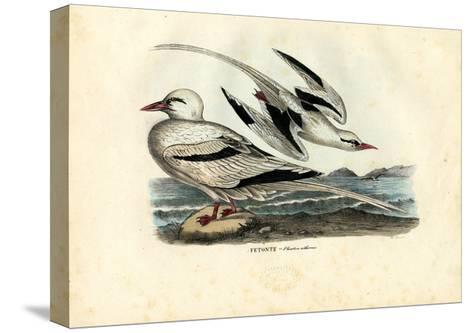 Red-Billed Tropicbird, 1863-79-Raimundo Petraroja-Stretched Canvas Print
