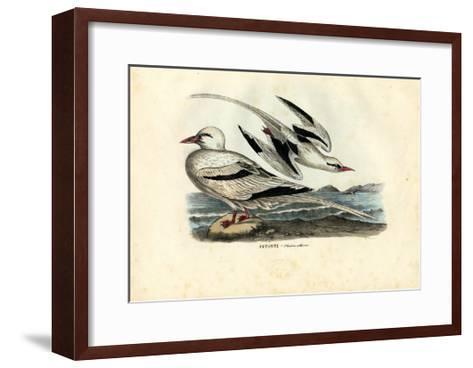 Red-Billed Tropicbird, 1863-79-Raimundo Petraroja-Framed Art Print