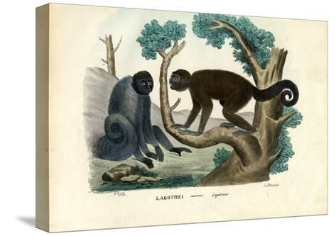 Woolly Monkey, 1863-79-Raimundo Petraroja-Stretched Canvas Print