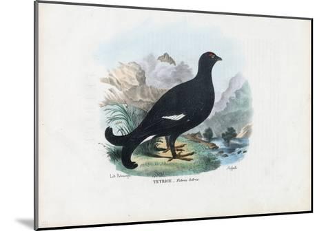 Black Grouse, 1863-79-Raimundo Petraroja-Mounted Giclee Print