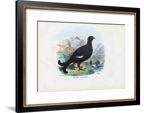 Black Grouse, 1863-79-Raimundo Petraroja-Framed Art Print