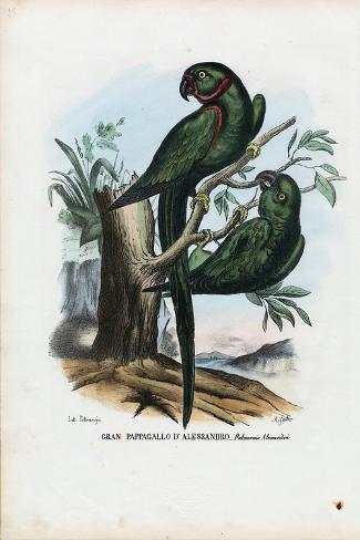 Rose-Ringed Parekeet, 1863-79-Raimundo Petraroja-Stretched Canvas Print