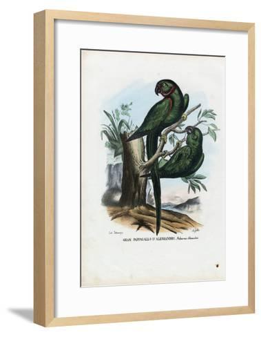 Rose-Ringed Parekeet, 1863-79-Raimundo Petraroja-Framed Art Print