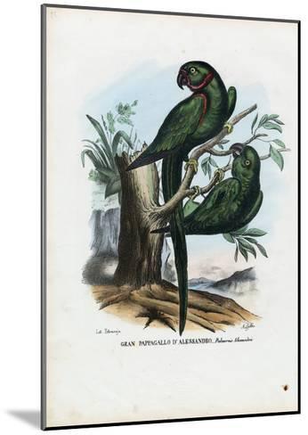 Rose-Ringed Parekeet, 1863-79-Raimundo Petraroja-Mounted Giclee Print