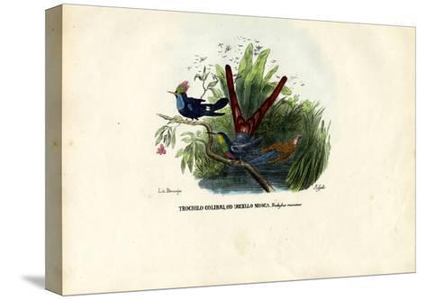 Hummingbirds, 1863-79-Raimundo Petraroja-Stretched Canvas Print