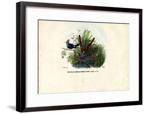 Hummingbirds, 1863-79-Raimundo Petraroja-Framed Art Print