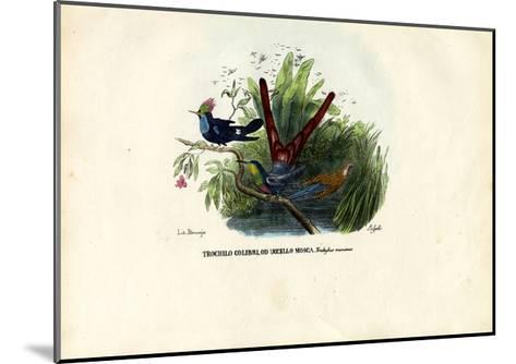 Hummingbirds, 1863-79-Raimundo Petraroja-Mounted Giclee Print