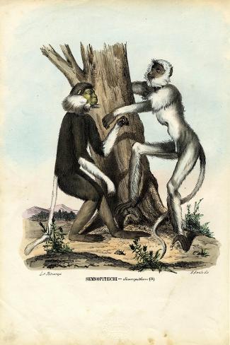 Langurs, 1863-79-Raimundo Petraroja-Stretched Canvas Print
