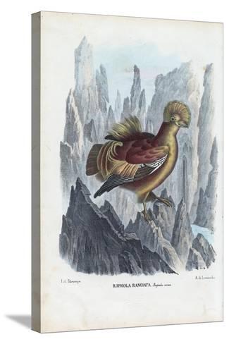 Cock-Of-The-Rock, 1863-79-Raimundo Petraroja-Stretched Canvas Print