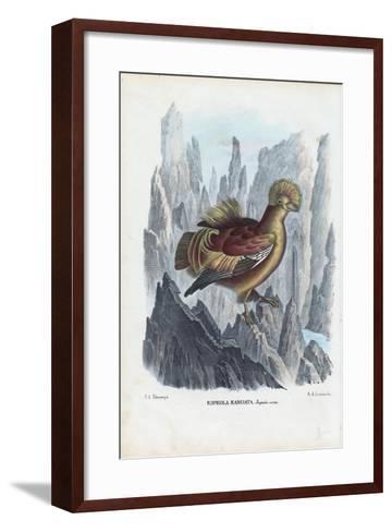 Cock-Of-The-Rock, 1863-79-Raimundo Petraroja-Framed Art Print