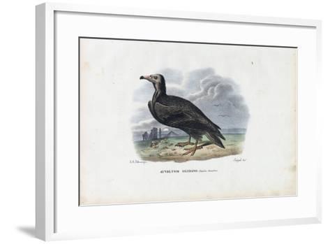Egyptian Vulture, 1863-79-Raimundo Petraroja-Framed Art Print