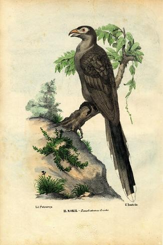 Yellow-Billed Cuckoo, 1863-79-Raimundo Petraroja-Stretched Canvas Print