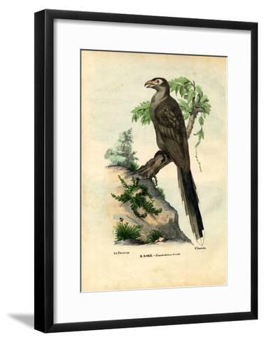 Yellow-Billed Cuckoo, 1863-79-Raimundo Petraroja-Framed Art Print