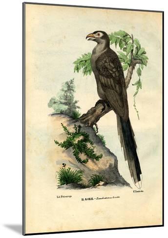 Yellow-Billed Cuckoo, 1863-79-Raimundo Petraroja-Mounted Giclee Print