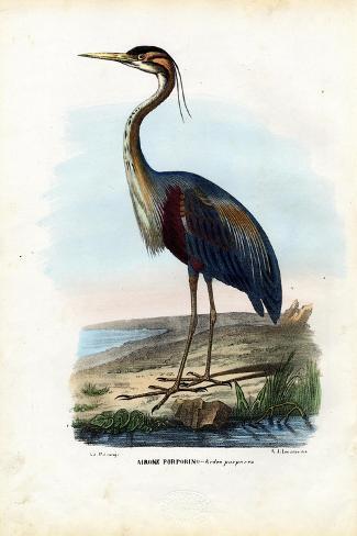 Purple Heron, 1863-79-Raimundo Petraroja-Stretched Canvas Print