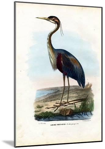 Purple Heron, 1863-79-Raimundo Petraroja-Mounted Giclee Print