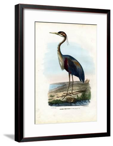 Purple Heron, 1863-79-Raimundo Petraroja-Framed Art Print
