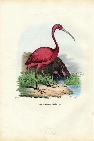 Scarlet Ibis, 1863-79-Raimundo Petraroja-Stretched Canvas Print