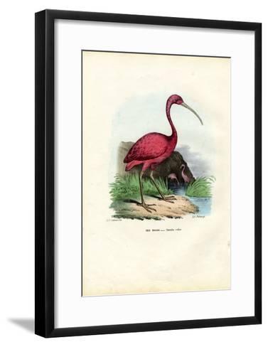 Scarlet Ibis, 1863-79-Raimundo Petraroja-Framed Art Print