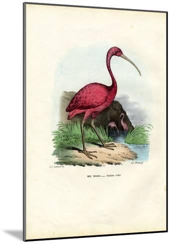 Scarlet Ibis, 1863-79-Raimundo Petraroja-Mounted Giclee Print