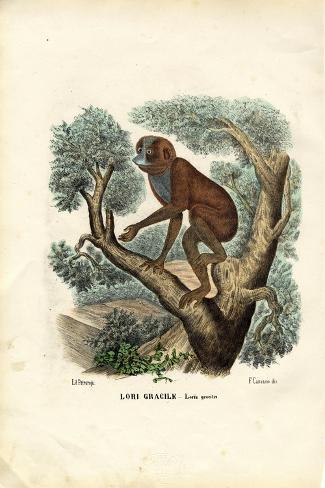 Slender Lori, 1863-79-Raimundo Petraroja-Stretched Canvas Print