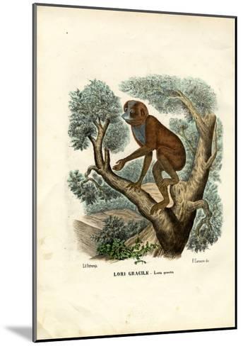 Slender Lori, 1863-79-Raimundo Petraroja-Mounted Giclee Print