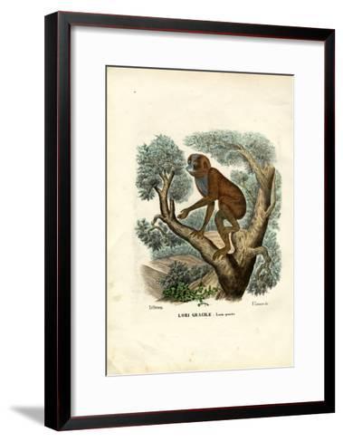 Slender Lori, 1863-79-Raimundo Petraroja-Framed Art Print