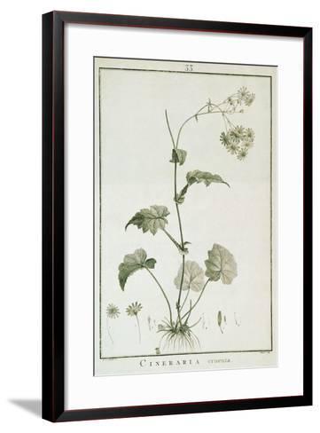 Cineraria Cruenta, from 'Sertum Angelicum', Published 1788-Pierre Joseph Redoute-Framed Art Print