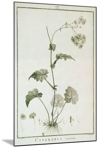 Cineraria Cruenta, from 'Sertum Angelicum', Published 1788-Pierre Joseph Redoute-Mounted Giclee Print