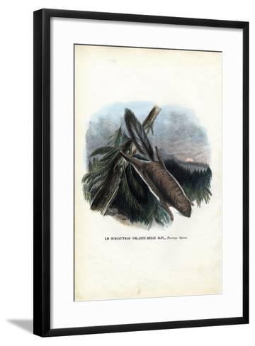 Flying Squirrel, 1863-79-Raimundo Petraroja-Framed Art Print