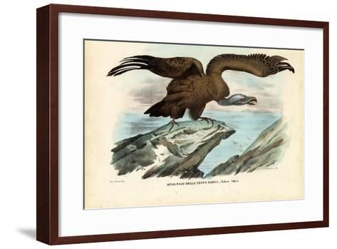 Griffon Vulture, 1863-79-Raimundo Petraroja-Framed Art Print