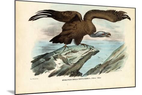 Griffon Vulture, 1863-79-Raimundo Petraroja-Mounted Giclee Print