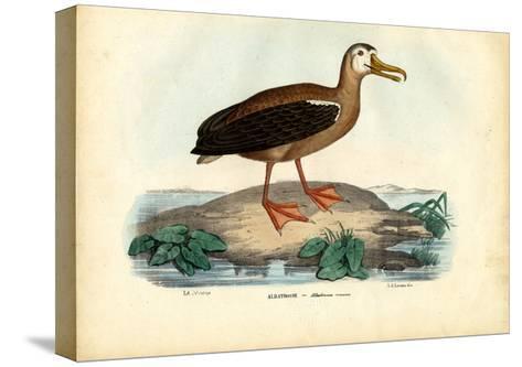Wandering Albatross, 1863-79-Raimundo Petraroja-Stretched Canvas Print