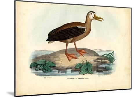 Wandering Albatross, 1863-79-Raimundo Petraroja-Mounted Giclee Print