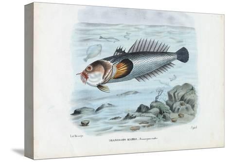 Atlantic Stargazer, 1863-79-Raimundo Petraroja-Stretched Canvas Print