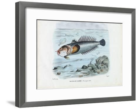 Atlantic Stargazer, 1863-79-Raimundo Petraroja-Framed Art Print