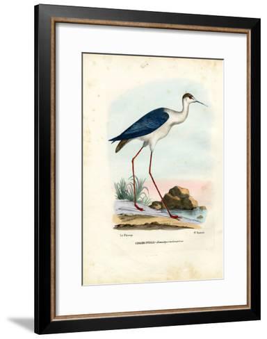 Black-Winged Stilt, 1863-79-Raimundo Petraroja-Framed Art Print